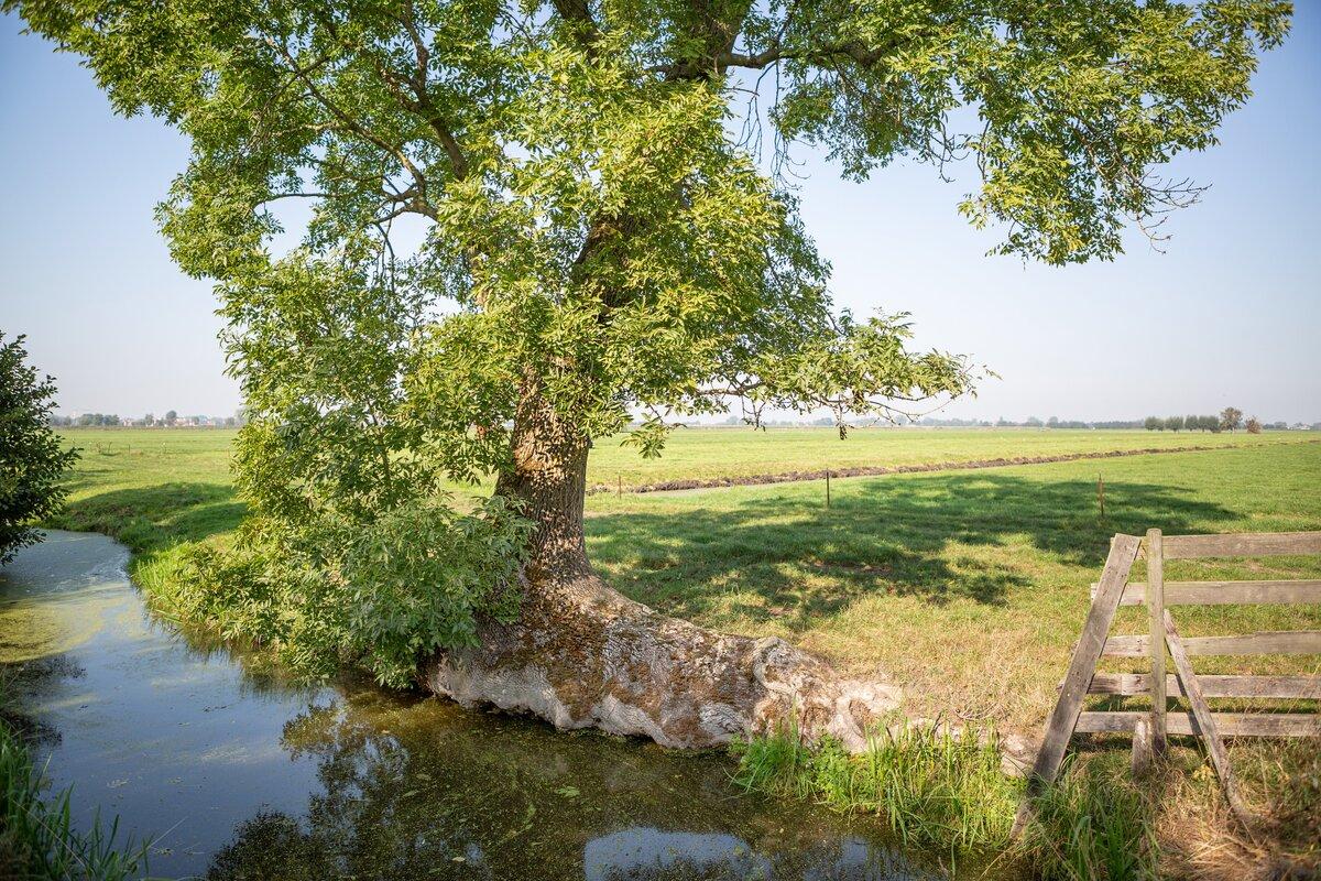 Breed gedragen 'Aanvalsplan Landschapselementen' gelanceerd