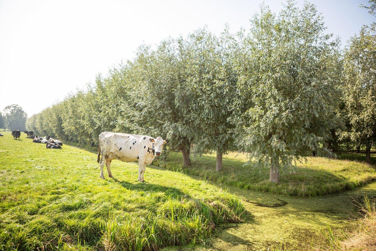 Vergaande reductie stikstofdepositie op natuurgebieden noodzakelijk, maar wel samen met de boeren