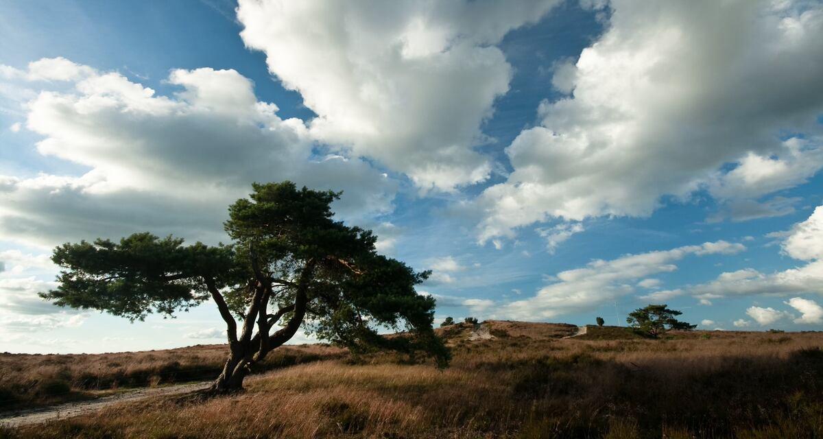 Veel natuur verloren door droogte